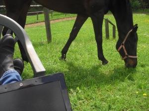 Arbeit kann auch auf der Pferdekoppel stattfinden